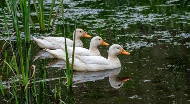 Bloc de foie gras de canard - Top Budget 150g