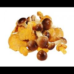 Golden Mushroom Pfifferlinge/ Stockschwämmchen gemischt tiefgefroren - 1 kg
