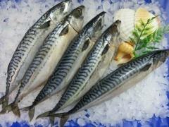 Makrelen tiefgefroren, ausgenommen, mit Kopf, Wildfang,ca.4-6 Stück, 2 kg Beutel